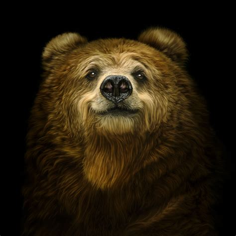 Bears and Other Creatures - Bradford Literature Festival