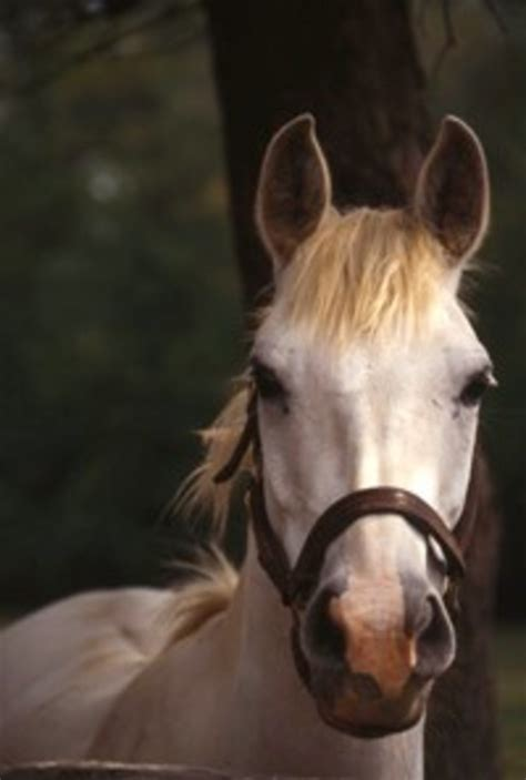 Are ear plaques better left alone? - The Horse Owner's