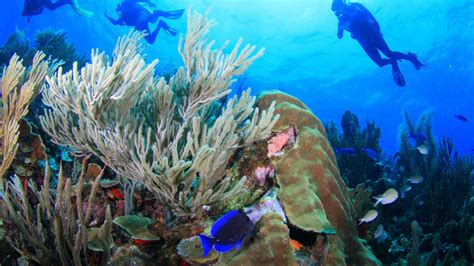 Help for Endangered Corals | California Academy of Sciences