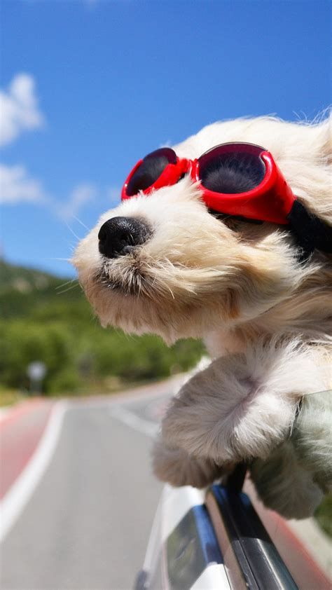 Wallpaper Dog, puppy, road, funny, glasses, hair, sky