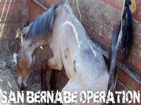 Animal cruelty: Largest Horse Slaughter In Mexico: Mercado